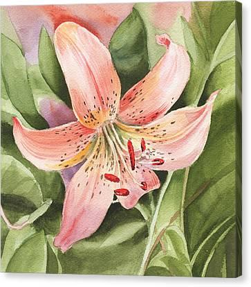 Tiger Lily Watercolor By Irina Sztukowski Canvas Print by Irina Sztukowski