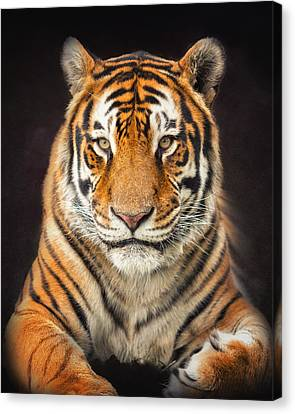 Tiger Canvas Print by Ron  McGinnis