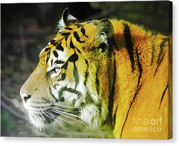 Tiger Canvas Print by Srikanth Tirunagari