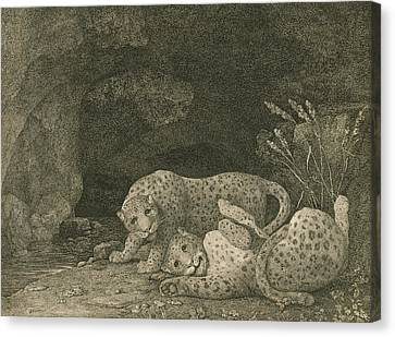 Tigers At Play Canvas Print by George Stubbs