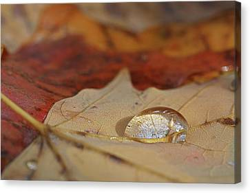 Tiny Lanscape Canvas Print by Juergen Roth