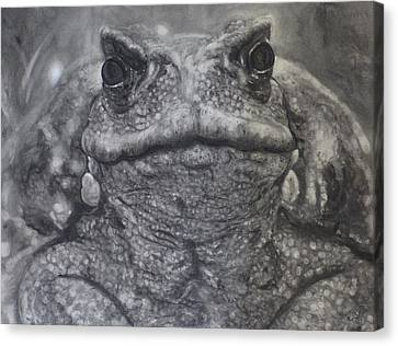 Toad Canvas Print by Adrienne Martino
