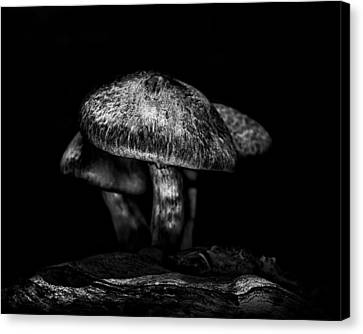 Toadstools On A Toronto Trail 1 Canvas Print by Brian Carson