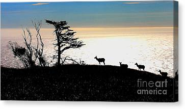 Tomales Bay Tule Elks Canvas Print by Wingsdomain Art and Photography