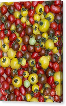Tomatoes  Canvas Print by Tim Gainey