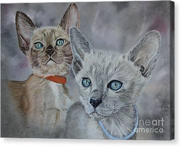 Tonkinese Kittens Canvas Print by Anne Cowell