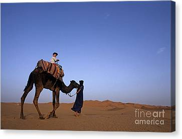 Touareg Man Leading Boy Riding Camel In Sahara Desert Canvas Print by Sami Sarkis