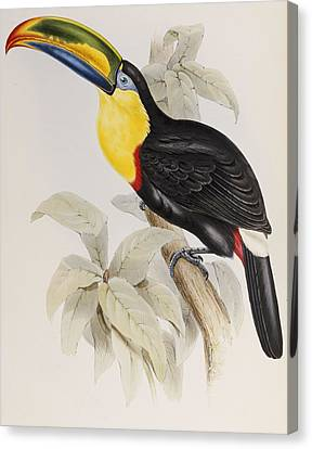 Toucan Canvas Print by John Gould