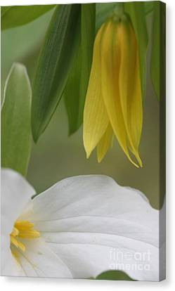Touch Of Yellow Canvas Print by Christopher Ewing