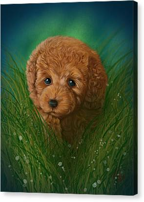 Toy Poodle Puppy Canvas Print by Michael Conley