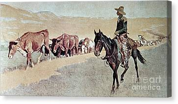 Trailing Texas Longhorns Canvas Print by Frederic Remington