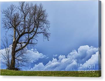 Tree And Stormy Sky Canvas Print by Thomas R Fletcher