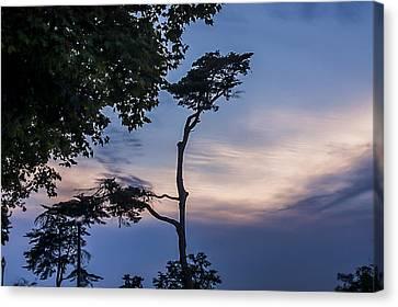Tree At Twilight Canvas Print by Shiran Patael