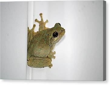 Spring Peeper Canvas Print by Tammy Goad