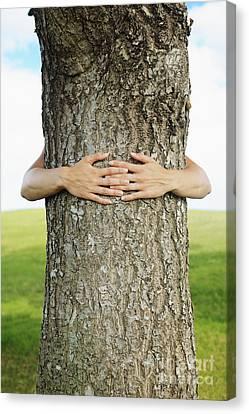 Tree Hugger 1 Canvas Print by Brandon Tabiolo - Printscapes