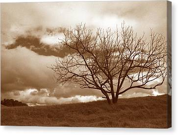 Tree In Storm Canvas Print by Kathy Yates