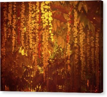 Tree Melancholy Canvas Print by Wim Lanclus