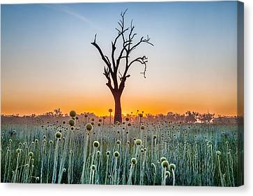 Tree Of Life Canvas Print by Az Jackson