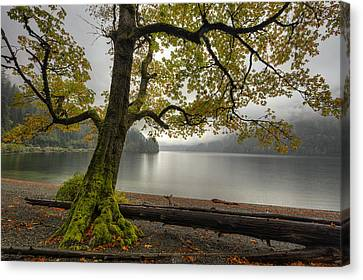 Tree On Cameron Lake Canvas Print by Mark Kiver
