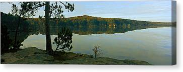 Tree On The Riverside, Wisconsin River Canvas Print by Panoramic Images
