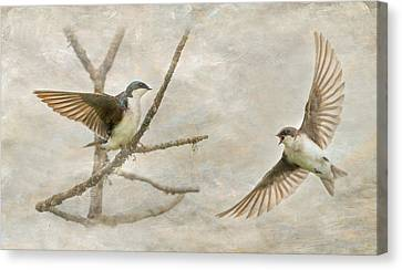 Tree Swallow Courtship Canvas Print by Angie Vogel