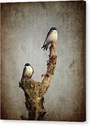 Tree Swallows Canvas Print by Al  Mueller