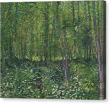 Trees And Undergrowth Canvas Print by Vincent van Gogh