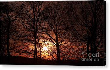 Trees At Sunset Canvas Print by Michal Boubin