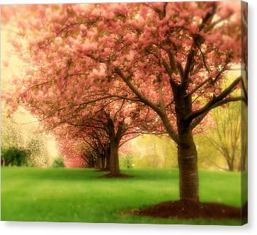 Trees In A Row Canvas Print by Angie Tirado