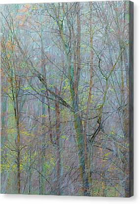 Trees In A Snowstorm Canvas Print by Joseph Smith