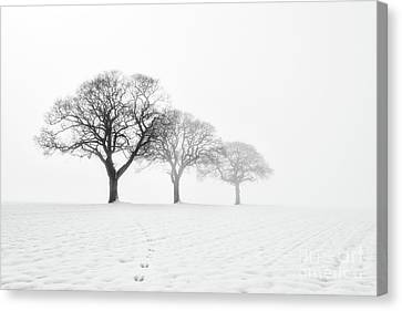 Trees In The Mist Canvas Print by Janet Burdon