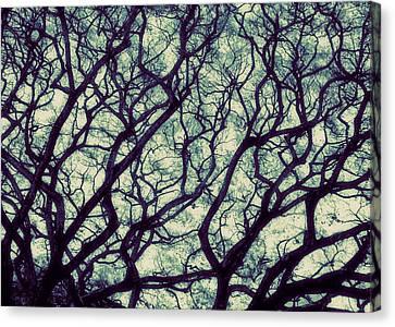 Trees Canvas Print by Ranjini Kandasamy