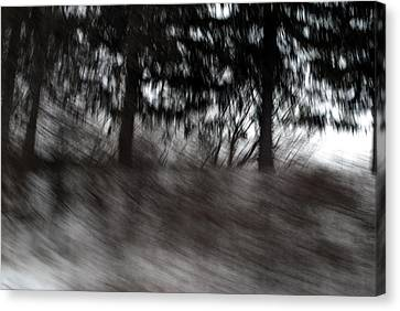 Treescape Canvas Print by David Hickey