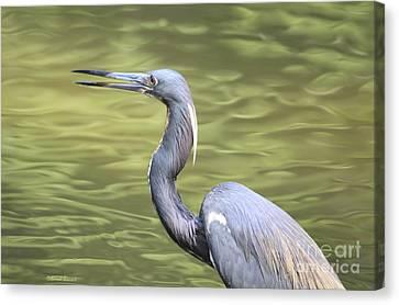 Tri Heron On Silk Canvas Print by Deborah Benoit