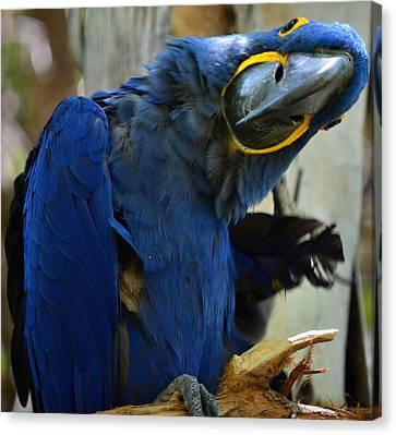 Tropical Bird- Maccaw Canvas Print by See My  Photos