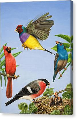Tropical Birds Canvas Print by RB Davis