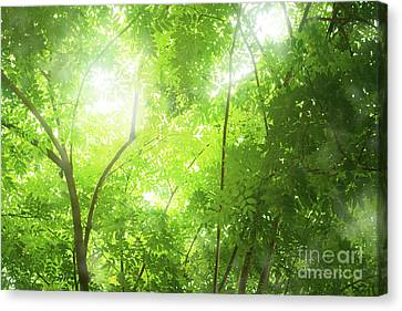 Tropical Forest Canvas Print by Atiketta Sangasaeng