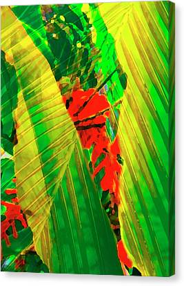Tropical Fusion Canvas Print by Stephen Anderson