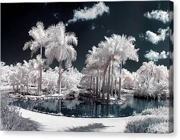 Tropical Paradise Infrared Canvas Print by Adam Romanowicz
