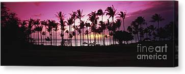 Tropical Sunset With Magenta Sky Canvas Print by Bill Schildge