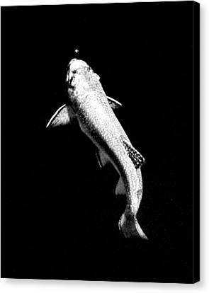 Trout Rising Canvas Print by Kevin Munro