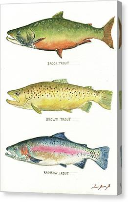 Trout Species Canvas Print by Juan Bosco