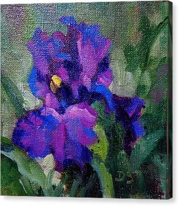 T's Iris Canvas Print by Donna Shortt