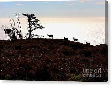 Tule Elks Of Tomales Bay Canvas Print by Wingsdomain Art and Photography