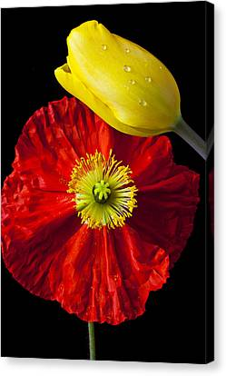 Tulip And Iceland Poppy Canvas Print by Garry Gay