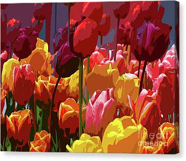 Tulip Confusion Canvas Print by Sharon Talson