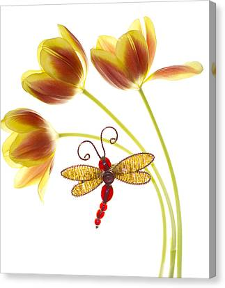 Tulip Dragonfly Canvas Print by Rebecca Cozart