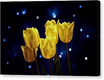 Tulip Twinkle Canvas Print by Tom Mc Nemar