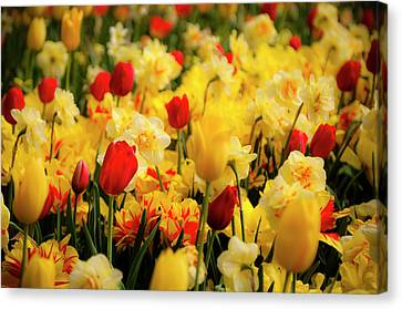 Tulips And Daffodils Canvas Print by Tamyra Ayles