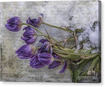 Tulips Frozen Canvas Print by Terry Rowe